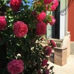 giardino-acetaia-dei-bago-fiori-rosa-entrata